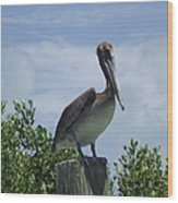 Perched Pelican Wood Print