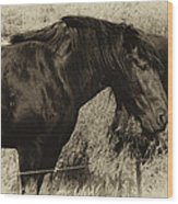 Percheron Prairie Horses Wood Print