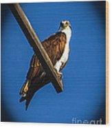 Perching Osprey Wood Print