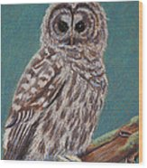 Perching Spotted Owl Wood Print by Thomas Maynard