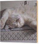 Percy Cat Sleep Stylist Wood Print