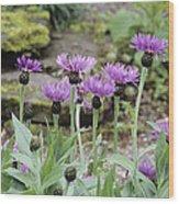 Perennial Cornflowers 'parham' Wood Print