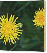 Perennial Sow-thistle Wood Print