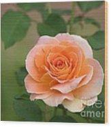 Perfect Peach Petals Wood Print