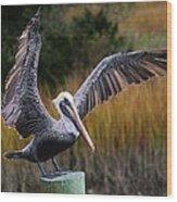 Perfect Pelican Wood Print