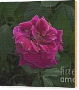 Perfect Red Rose Wood Print