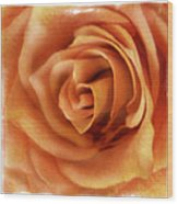 Perfection In Peach Wood Print
