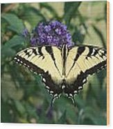 Perfectly Aligned Butterfly On Butterfly Bush Wood Print