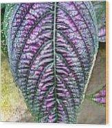 Perisan Plant Wood Print