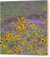 Perky Golden Coreopsis Wildflowers Wood Print