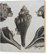 Perspectives Of A Shell Wood Print