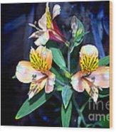 Peruvian Lily In My Garden Wood Print