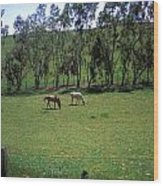 Petaluma Pasture Wood Print