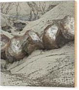 Petrified Forest 1 Wood Print