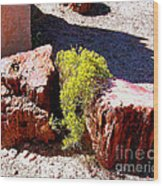 Petrified Tree Stumps In Arizona Wood Print