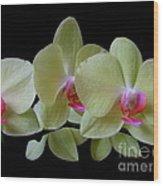 Phalaenopsis Fuller's Sunset Orchid No 1 Wood Print