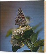 Phaon Crescent Butterfly Wood Print