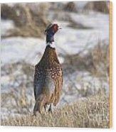 Pheasant In The Winter Wood Print