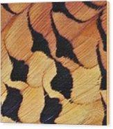 Pheasant Plumage Wood Print