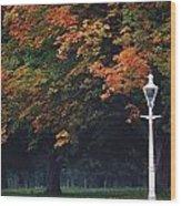 Phoenix Park, Dublin, Co Dublin Wood Print