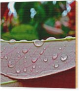 Photinia Veins Wood Print