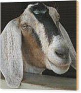 Photogenic Goat Wood Print