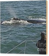 Photographer On Whale Watching Boat Wood Print