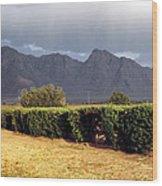 Picacho Peak Hedge Wood Print
