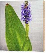 Pickerel Blue Pontederia Cordata Wood Print
