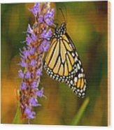 Picky Monarch Wood Print