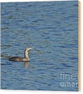 Pied-billed Grebe Looks Up Wood Print by Lynda Dawson-Youngclaus