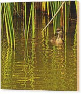 Pied-billed Grebe Near The Reeds Wood Print