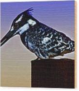 Pied Kingfisher Wood Print