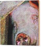 Pig Sleeping Wood Print