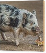 Pig With An Attitude Wood Print