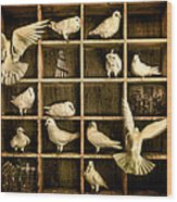 Pigeon Holed Wood Print