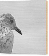 Pigeon Pride Wood Print