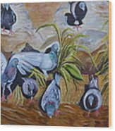 Pigeons At Rancho De Chimayo Wood Print