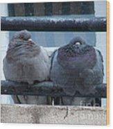 Pigeons Perching Wood Print