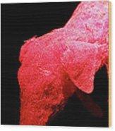 Piggled Wood Print