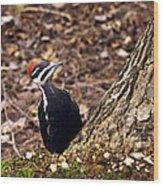 Pileated Woodpecker 3 Wood Print