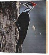Pileated Woodpecker Dryocopus Pileatus Wood Print