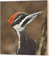 Pileated Woodpecker Wood Print