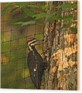 Pileated Woodpecker Wood Print