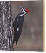 Pileated Woodpecker Young Wood Print