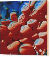 Pills Containing The Drug Ecstasy Wood Print