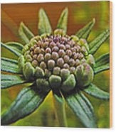 Pinchshin Bud Wood Print