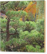Pine And Autumn Colors In A Japanese Garden II Wood Print