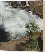 Pine And Falls Glen Alpine Falls Wood Print