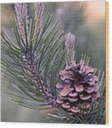 Pine Cone At Sundown Wood Print